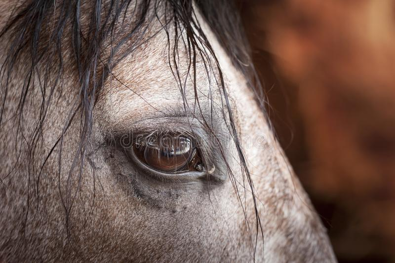 Horse`s eye. Color close-up image of horse`s eye stock photography