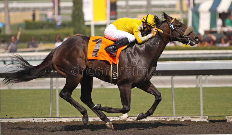 Color of Courage Wins an Allowance Race stock photo