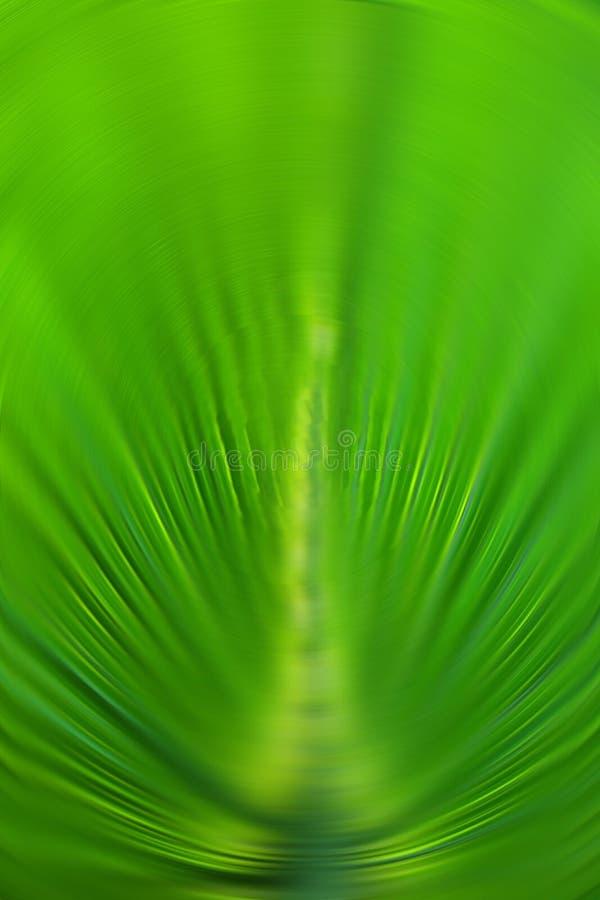Color de fondo verde abstracto de la hoja de palma en foco radial de la falta de definición imagenes de archivo