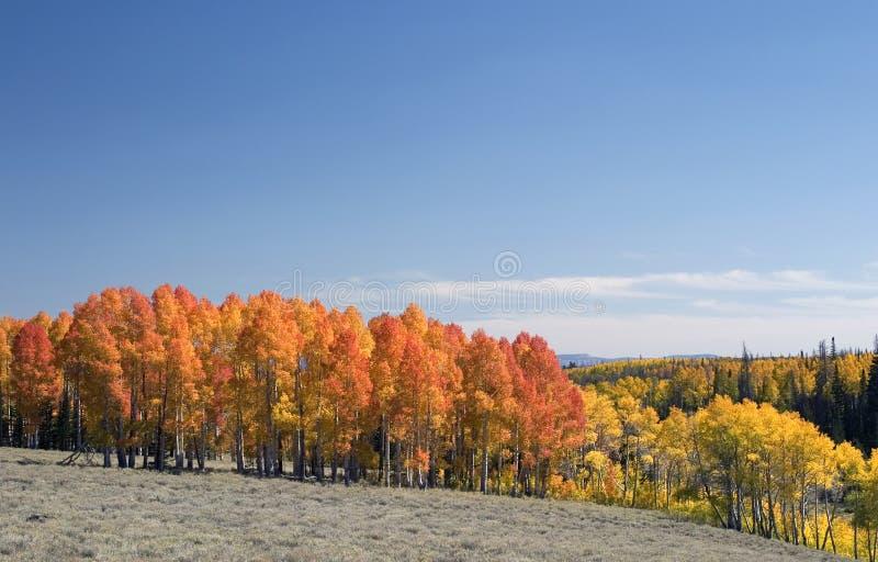 Download Color de la caída foto de archivo. Imagen de colorido - 7151220