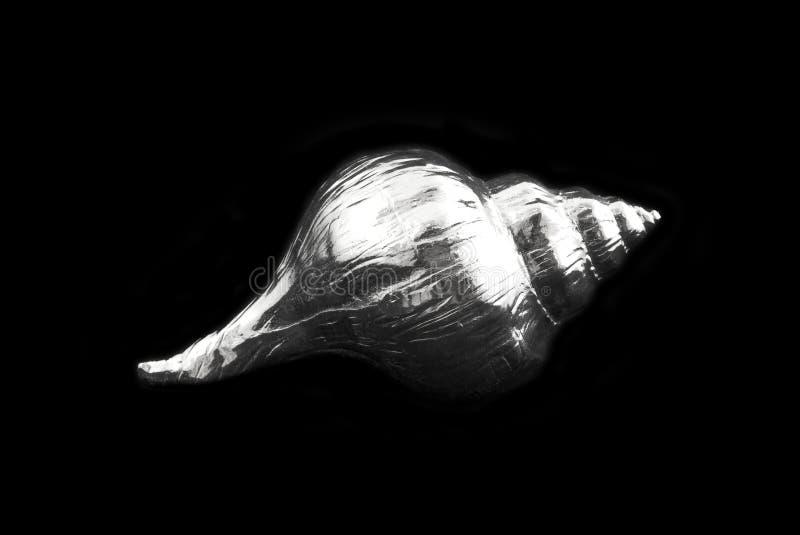 Color de la plata del shell del mar fotografía de archivo