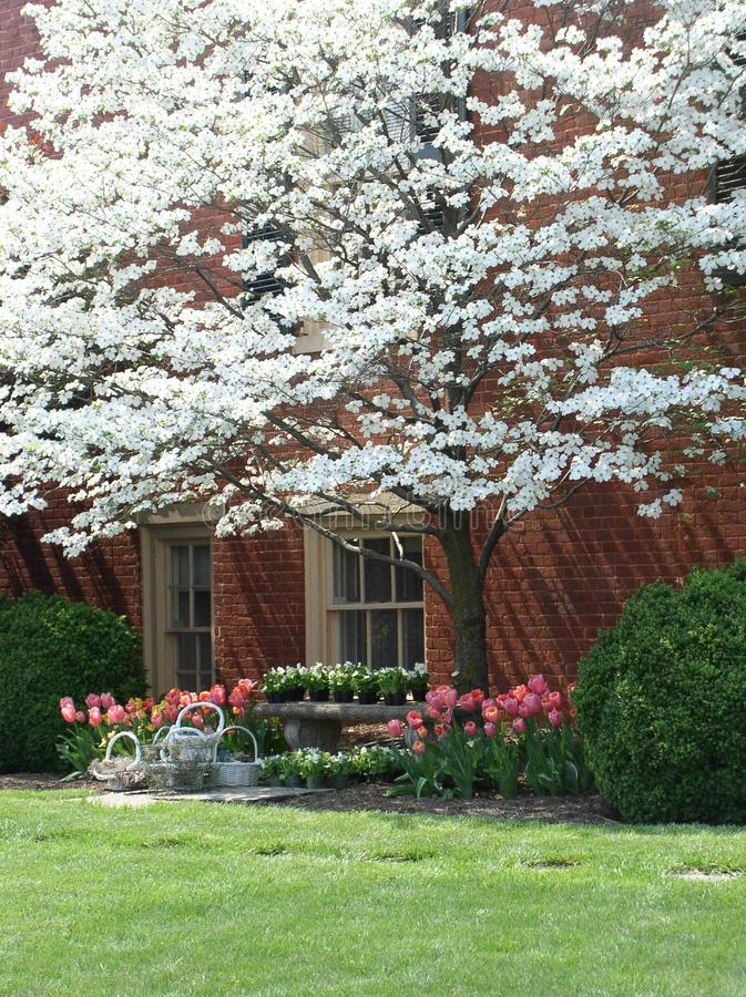 Color de la primavera fotografía de archivo libre de regalías