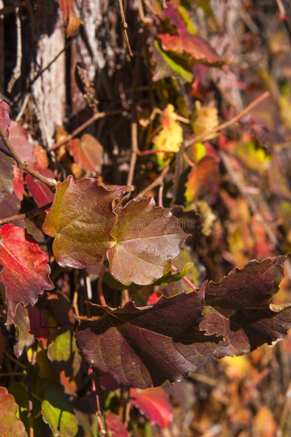 Color De Las Hojas Del Invierno Imagen de archivo - Imagen de ...