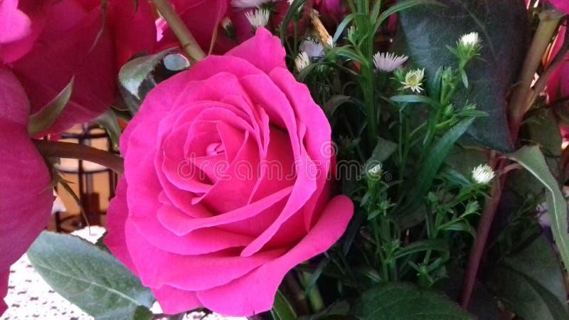 Color de las rosas imagen de archivo libre de regalías
