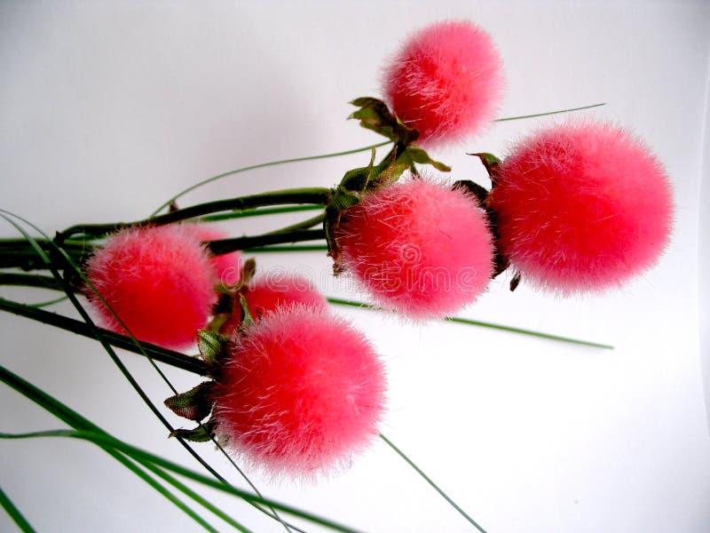 Color de rosa imágenes de archivo libres de regalías