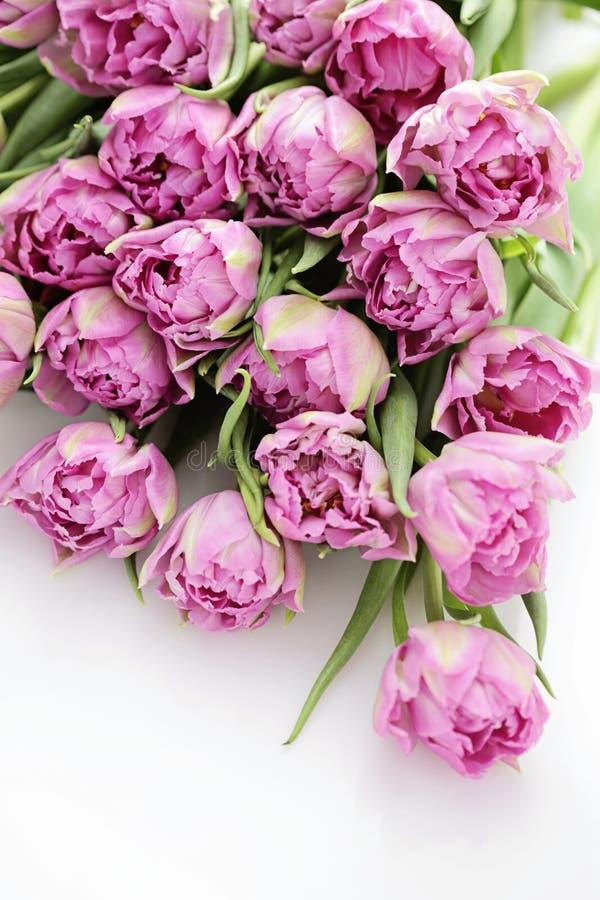 Color de rosa encantador fotografía de archivo