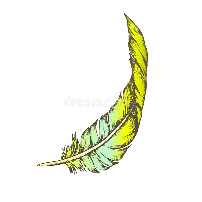 Color Decorative Bird Element Feather Vintage Vector stock illustration