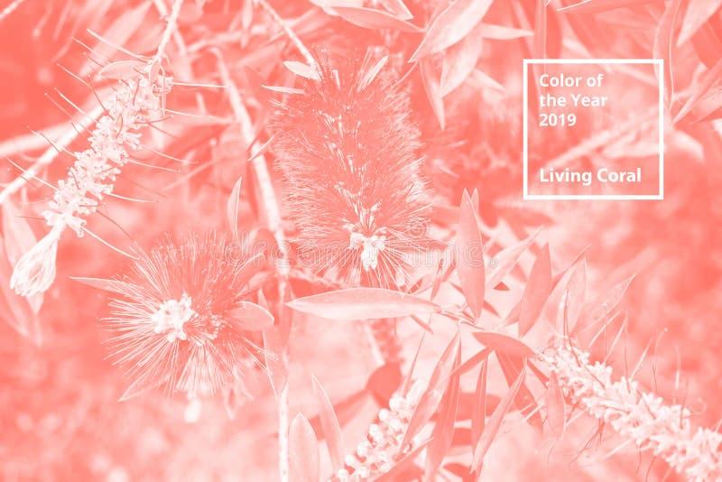 Color del coralino vivo del año 2019 Modelo natural floral de las flores, ramas Paleta popular de la tendencia para el diseño imágenes de archivo libres de regalías