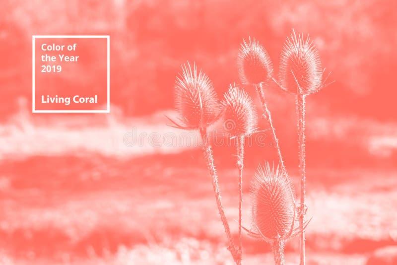 Color del coralino vivo del año 2019 Modelo natural floral de ramas Paleta popular de la tendencia para los ejemplos del diseño imagenes de archivo