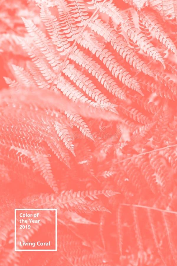 Color del coralino vivo del año 2019 Modelo natural floral del helecho Paleta popular de la tendencia para los ejemplos del diseñ fotos de archivo libres de regalías