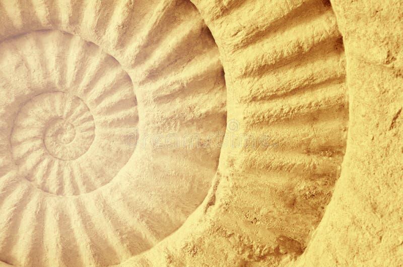 Color del fósil prehistórico de la amonita foto de archivo libre de regalías