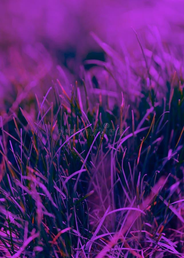 Color del a?o 2018: Ultravioleta Color de color morado oscuro en colores pastel del extracto, sobre la base de la hierba fotografía de archivo libre de regalías