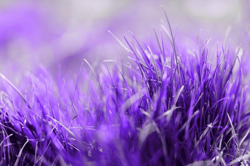 Color del a?o 2018: Ultravioleta Color de color morado oscuro en colores pastel del extracto, sobre la base de la hierba fotos de archivo