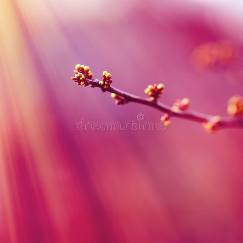 Color del a?o 2018: Ultravioleta Color de color rosa oscuro en colores pastel del extracto, sobre la base de la hierba foto de archivo libre de regalías