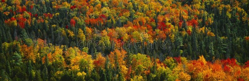 Color del otoño imagenes de archivo