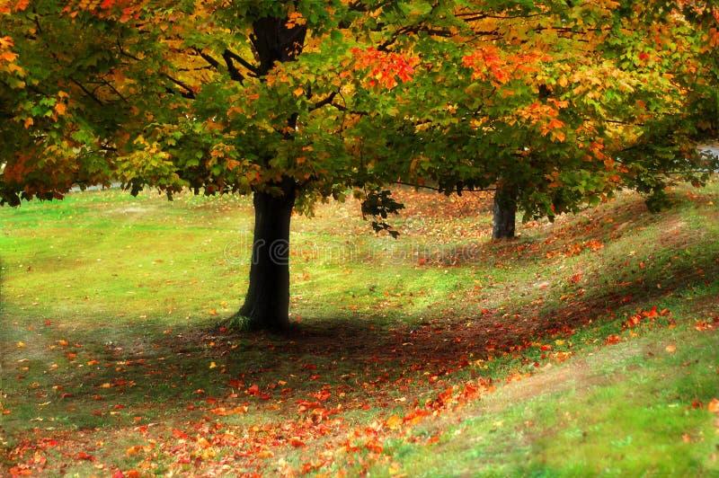 Color del otoño fotografía de archivo libre de regalías