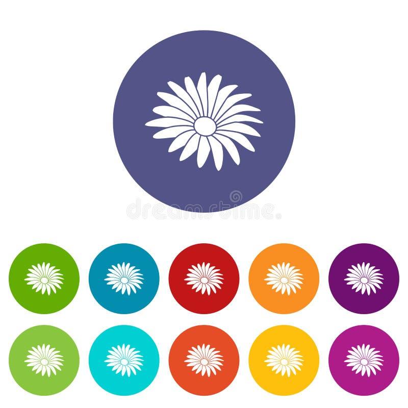 Color del vector del sistema de los iconos de la flor de Gerber ilustración del vector