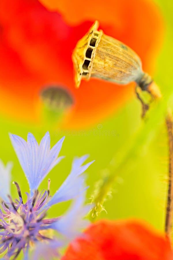 Color del wildflower del verano fotos de archivo