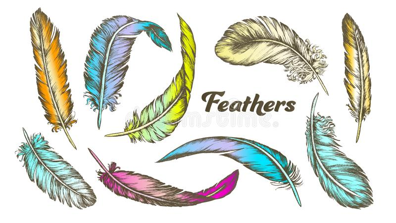 Color Different Feathers Set Ink Vector stock illustration