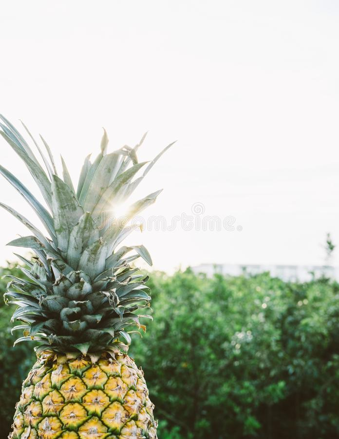 Color, Exotic, Food, Freshness royalty free stock photo