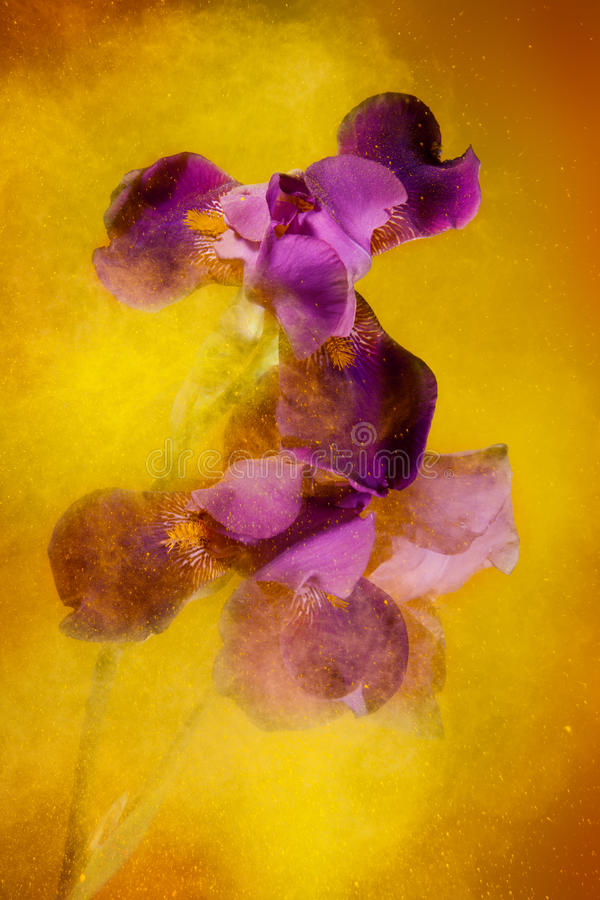 Download Color Explosion Royalty Free Stock Images - Image: 20454229