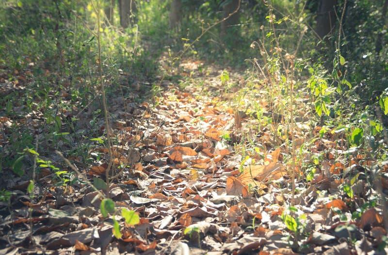 Color filtrado, piso secado del vintage de las hojas en bosque imagen de archivo