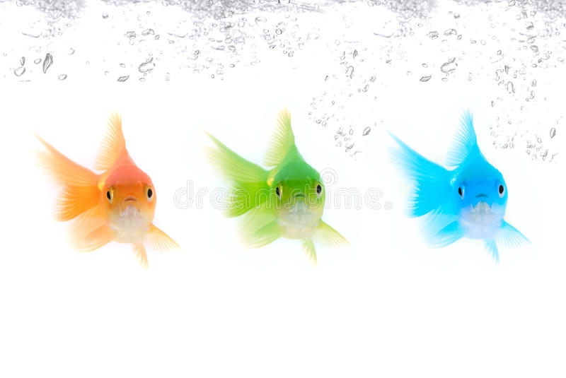Color fishes stock photography