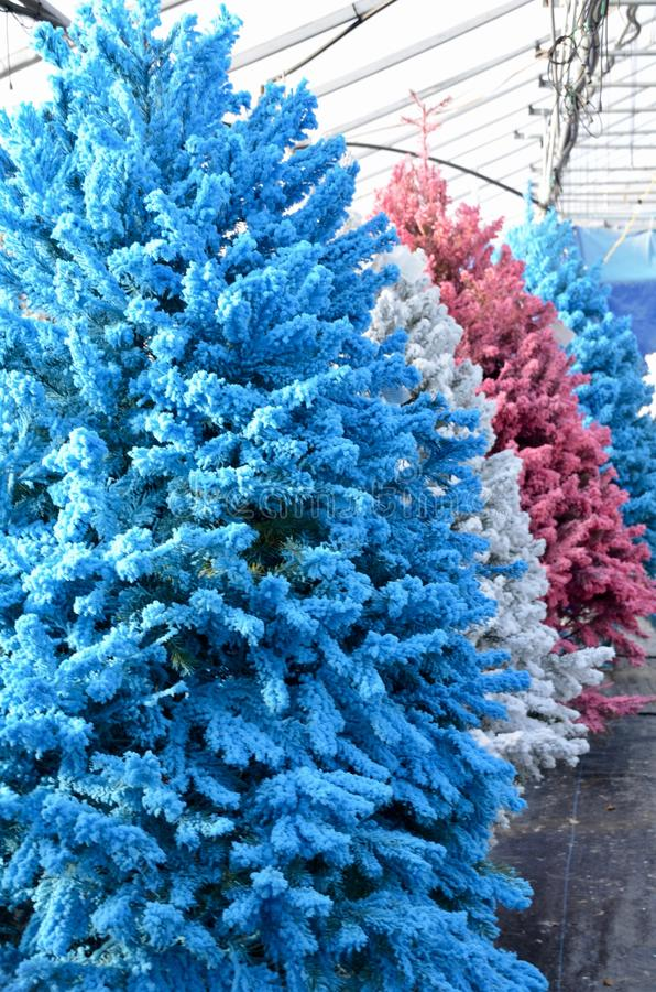 Color Flocked Christmas Trees. A row of christmas trees with colored flocking for sale at the garden store royalty free stock photos