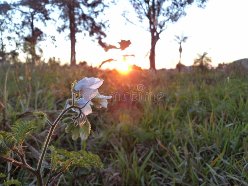 Flower reflecting its beauty in a sunset royalty free stock photography