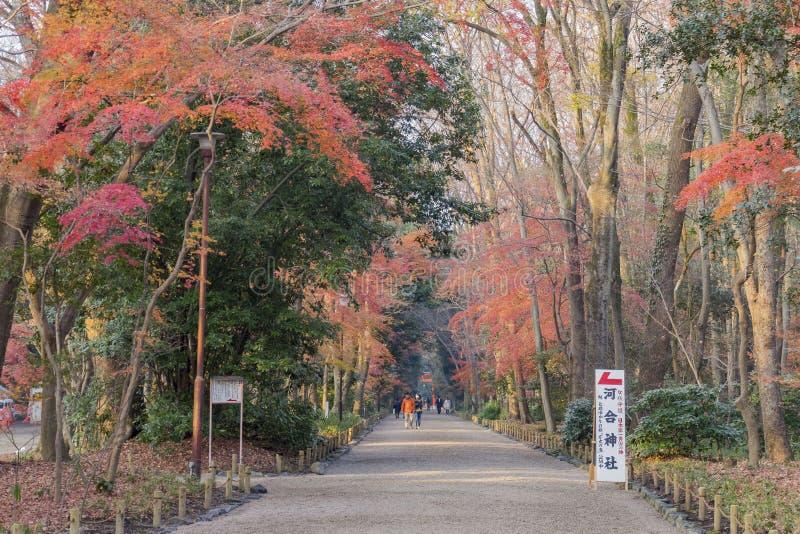 Color hermoso de la caída cerca de la capilla de Shimogamo imagenes de archivo