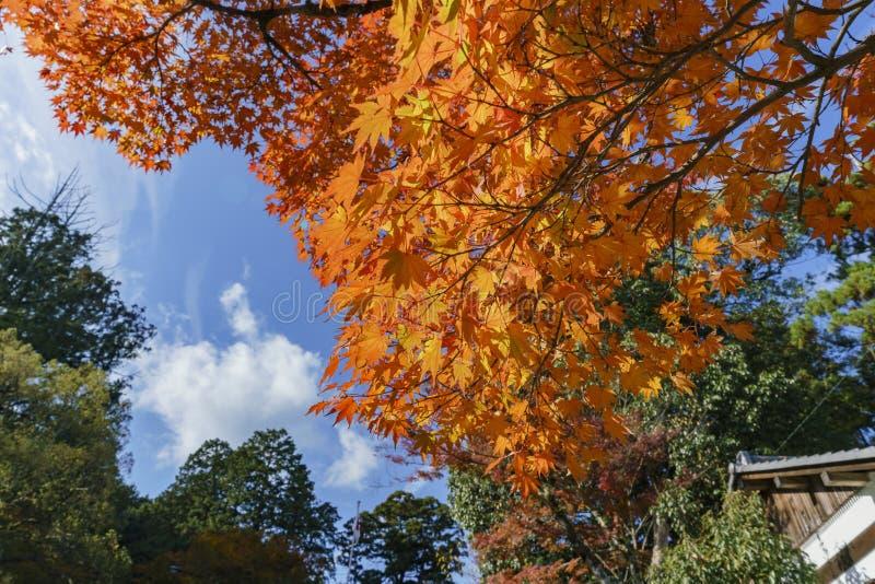 Color hermoso de la caída cerca de Hiyoshi Taisha imagen de archivo libre de regalías