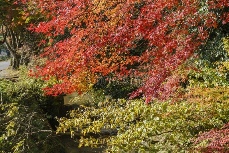 Color hermoso de la caída cerca de Omi Jingu fotos de archivo