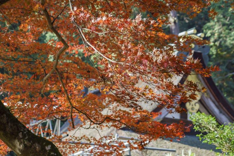 Color hermoso de la caída de Hiyoshi Taisha foto de archivo libre de regalías