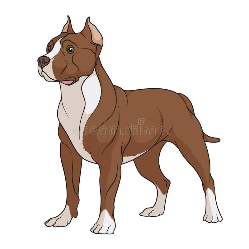 Color illustration of a chocolate, brown pit bull with white spots. Isolated vector object. stock illustration
