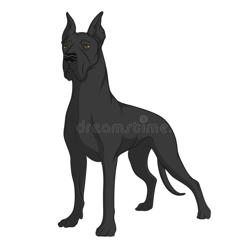 Color image of a black Great Dane. Isolated vector object on white background stock illustration