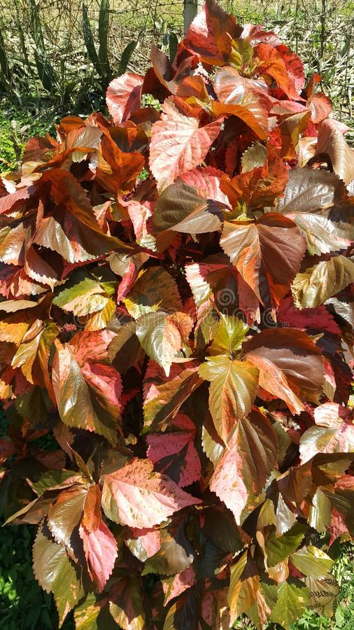 Color. Leaves beautiful liking nature green stock photography