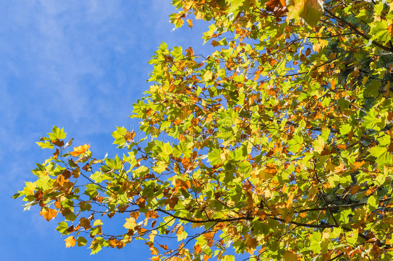 Trees Leaves Colors Seasons Royalty Free Stock Photography