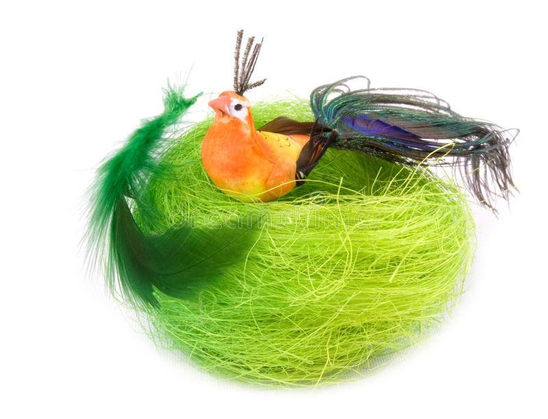 Download Color little bird in nest stock image. Image of feathers - 26031487