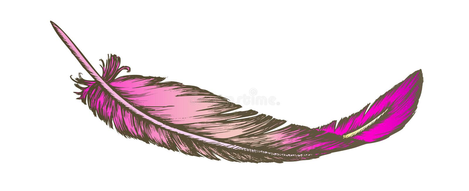 Color Lost Bird Outer Element Feather Hand Drawn Vector stock illustration