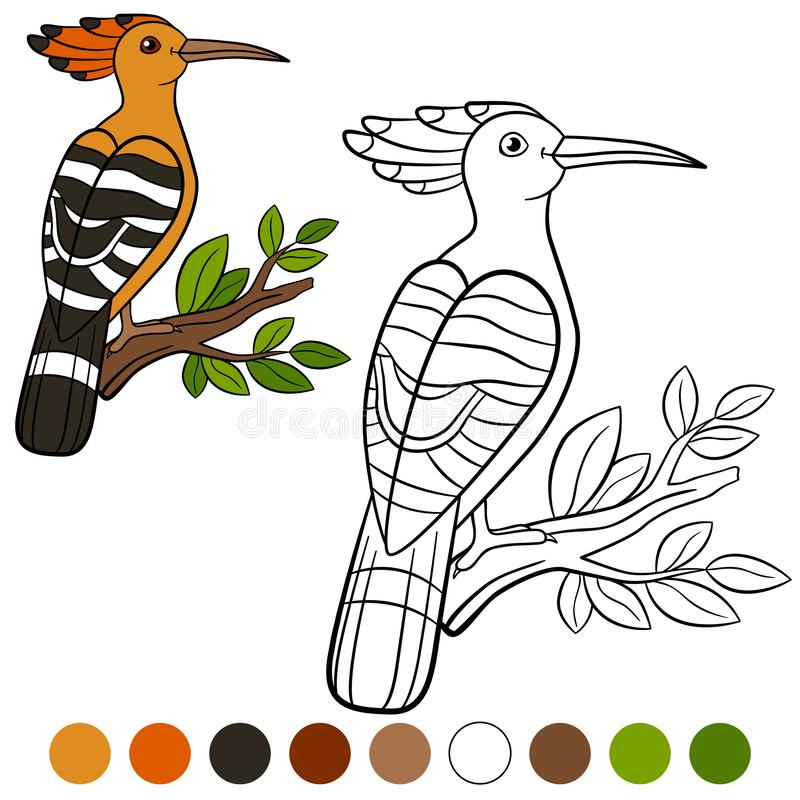 Color me: hoopoe. Cute beautiful hoopoe on the tree branch stock illustration