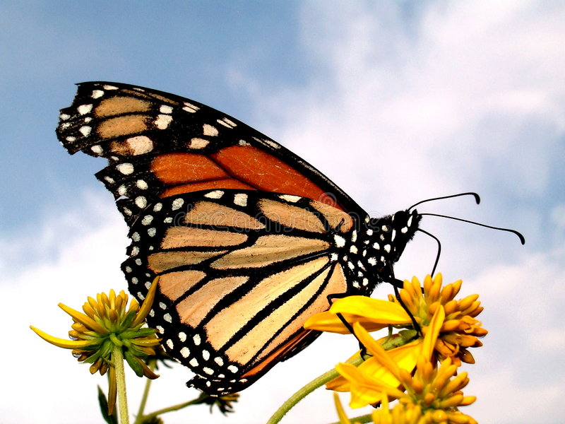 Color by Nature Butterfly stock photography