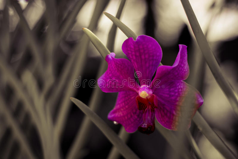 Color of an orchid stock image