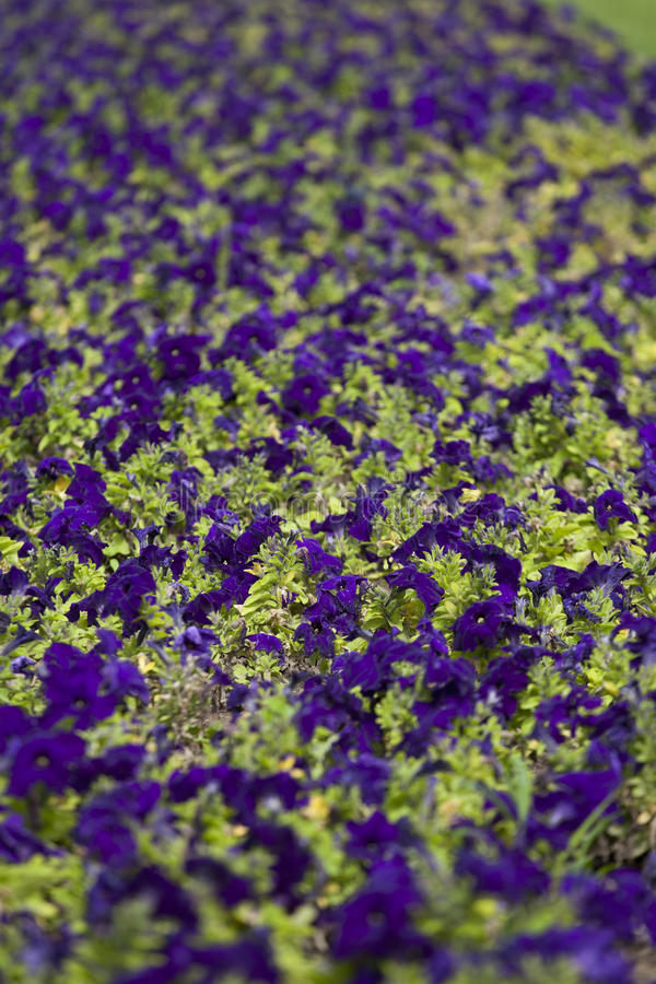 Download Colour pattern stock image. Image of texture, garden - 31575315