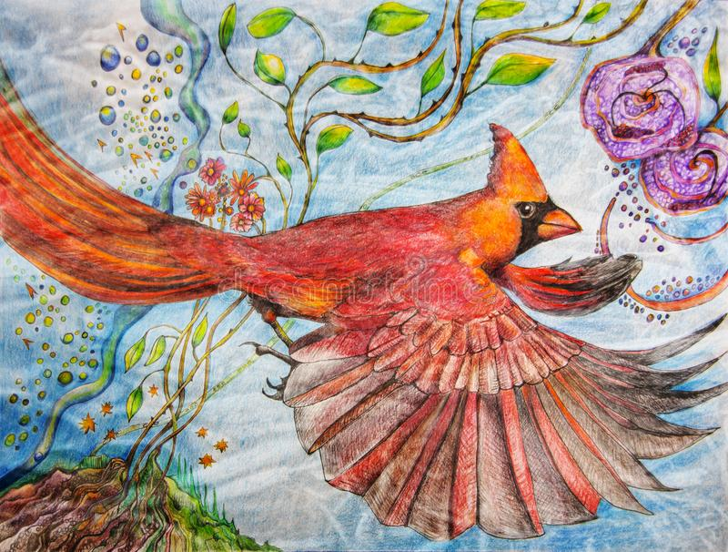 Color pencil painting of a male cardinal in flight. A hand rendered image of a painting in color pencil of a bright red male cardinal in flight. Animated flora vector illustration