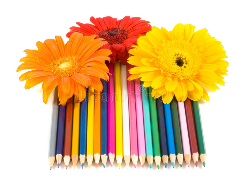 Color pencils and flower. / isolated royalty free stock image
