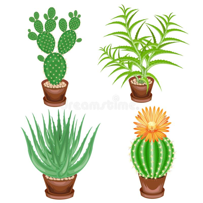 Color picture. A collection of houseplants in pots. Crassula, aloe vera, prickly pear, Mammillaria. Lovely hobby for collectors of stock illustration