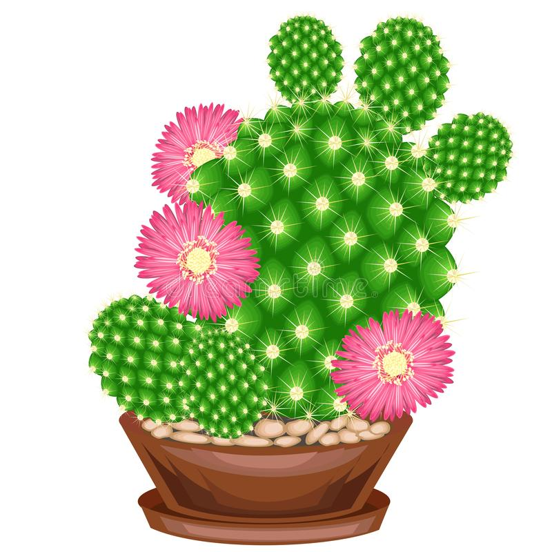 Color picture. Potted plant in a pot. The green cactus is spherical with tubercles covered with spines. Mammillaria, hymnocalicium vector illustration