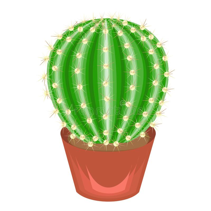 Color picture. Potted plant in a pot. The green cactus is spherical with tubercles covered with spines. Mammillaria, hymnocalicium stock illustration