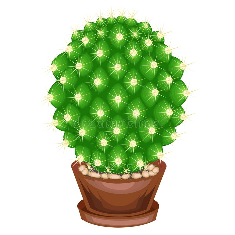 Color picture. Potted plant in a pot. The green cactus is spherical with tubercles covered with spines. Mammillaria, hymnocalicium royalty free illustration