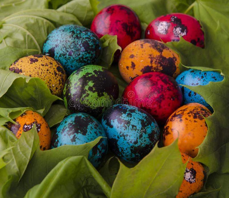 Colored Easter eggs on a background of spring green leaves. Color quail Easter eggs on a background of spring green leaves.Manual work stock images